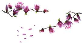 Naklejka na ścianę Magnolia WS-0015(2)