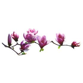 Naklejka na ścianę Magnolia WS-0015