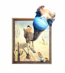 Naklejka na ścianę Obraz Wielbłąd WS-0308
